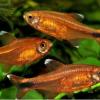 Donderdag 15 november 2018 ledenavond: Adembenemende waterdieren uit Zuid Amerika door Peter Oranje