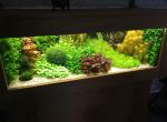 Donderdag 21 februari 2019 Algemene ledenvergadering + Het aquarium van Arie Bevaart