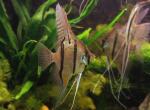 Donderdag 16 Mei 2019 ledenavond: Het Speciaal Aquarium door Leo Brand