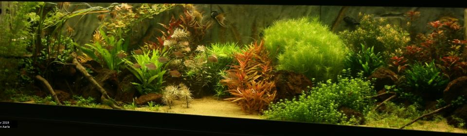 Vrijdag 6 december 2019 Bakkenschouw: Het grote aquarium van Anthony van Aarle