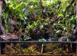 Donderdag 20 februari 2020 ledenavond: Van Aquarium naar Paludarium